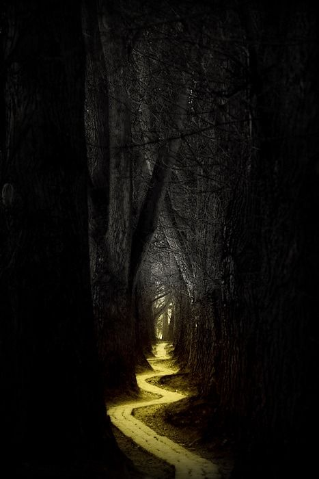Path through the woods (source: apologies to the owner/creator, not sure where this is from)